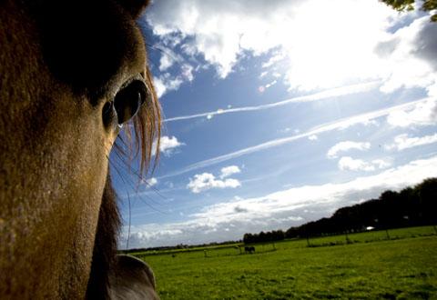 Nieuwsgierig Fries paard