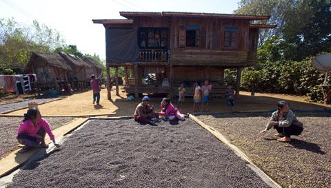 Typisch huis in het Bolaven-gebied: op palen, veel mensen, koffie die ligt te drogen op de grond.
