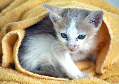 Jaaaa... de verplichte foto van het-katje-in-de-handdoek. Het is toch anders als het je eigen zijn, hè ;-)