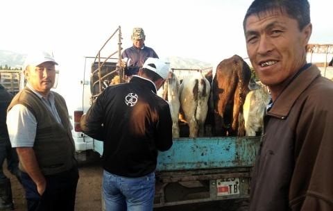 Op de wekelijks veemarkt, 's morgens om zes uur.