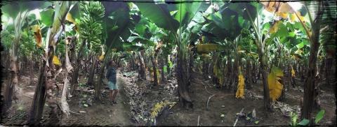Charlotte in het bananenbos