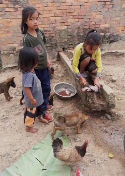 Akha-meisje maakt vis schoon. De ingewanden zijn voor de honden.