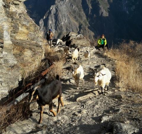 Een pad dat sinds mensenheugenis door herders wordt gebruikt.